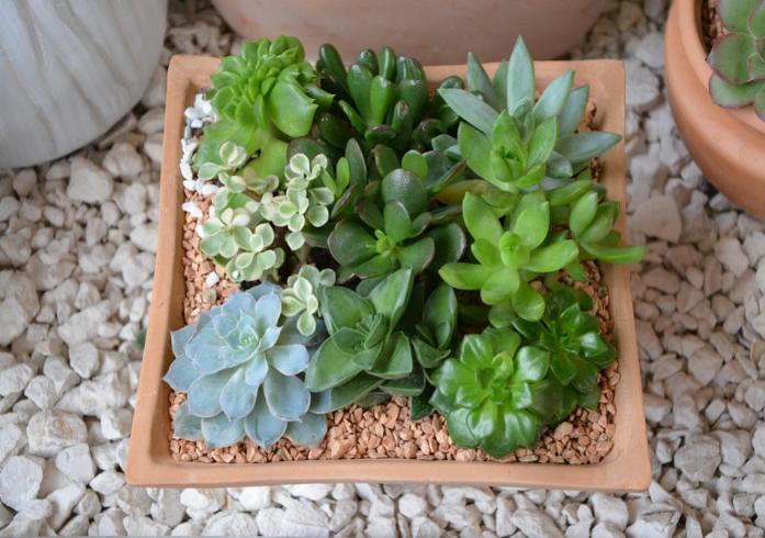 Composició amb plantes – 16 de maig de 2018